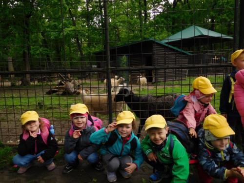 Výlet Vláček, Zoo